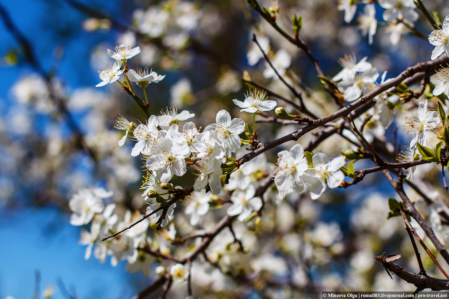Анапа_весна