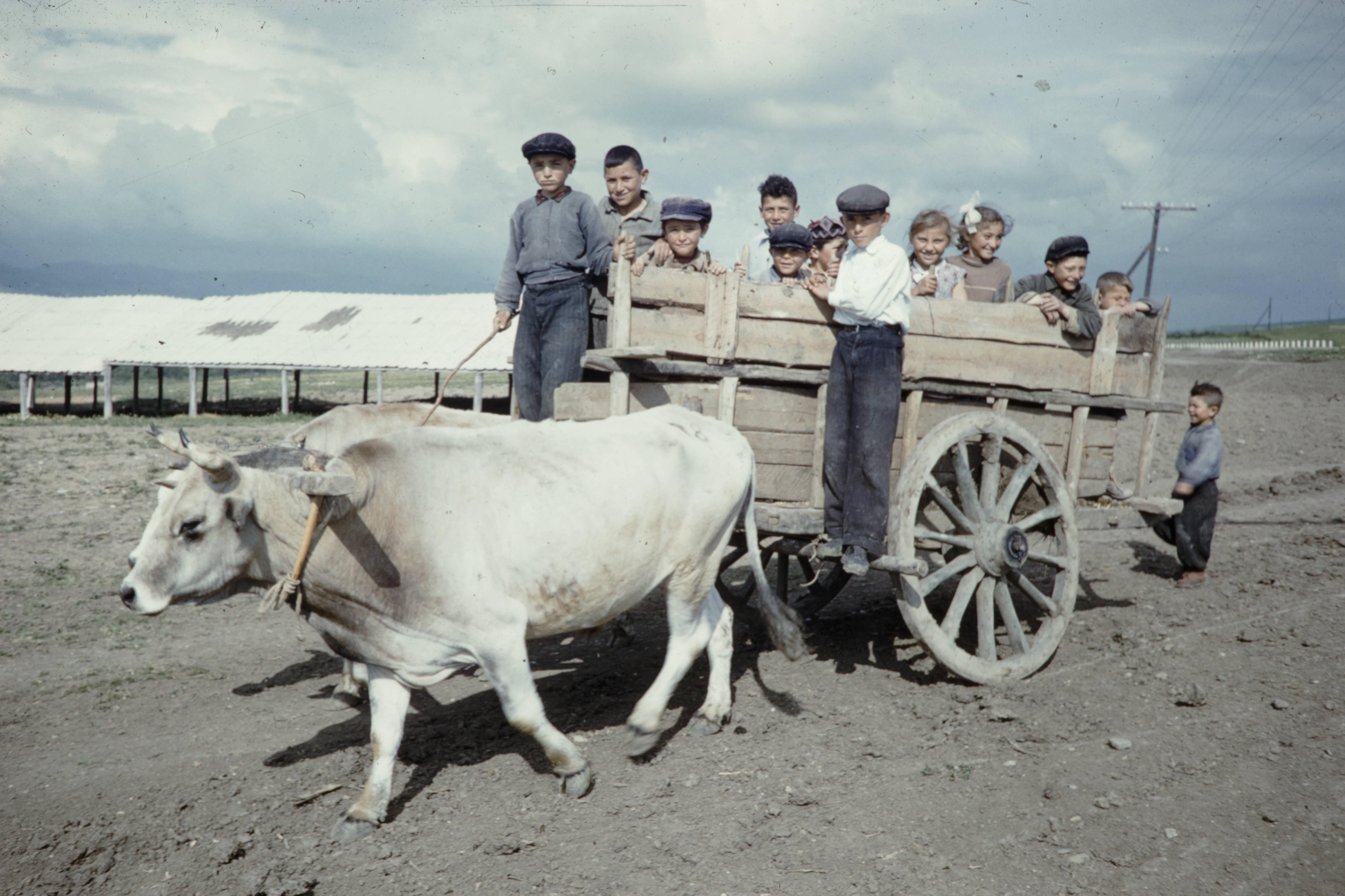 Крестьянские дети на телеге, запряженной волами