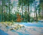 Смеющийся лес. Он пахнет настоем солнца и сосны.