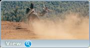 http//img-fotki.yandex.ru/get/105020/2431200.2b/0_134c94_a83b5_orig.png