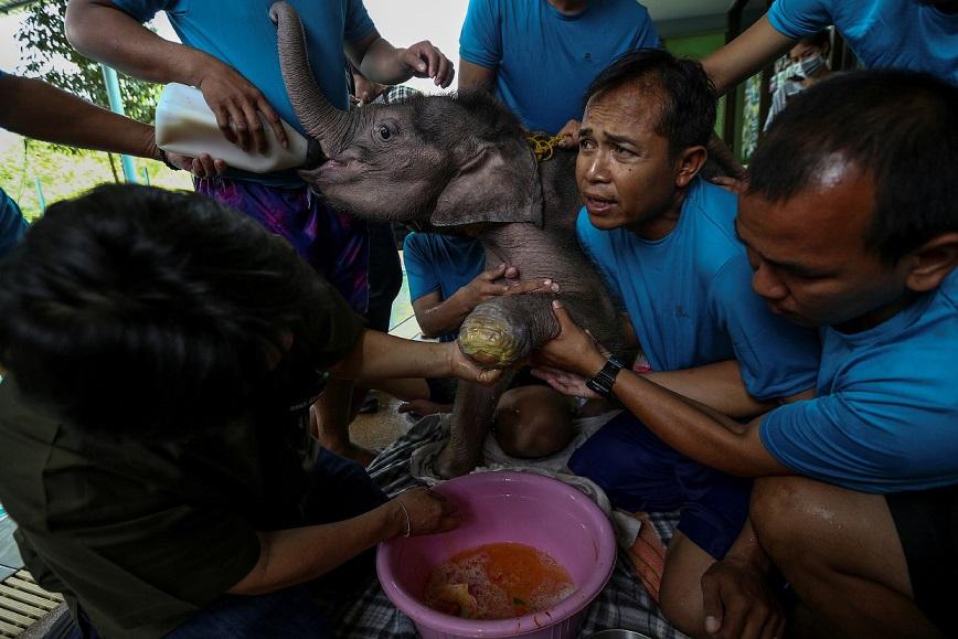 В парке Фа Джам холят и лелеют, в Таиланде к слонам вообще относятся уважительно. А жителей той злоп