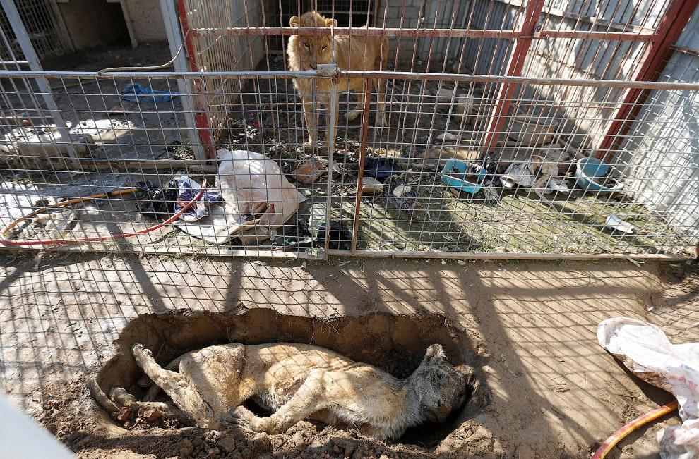 22. В автомобиле взорвалась бомба. Вот так тут и живут, в Мосуле. Ирак, 5 марта 2017. (Фото Ari