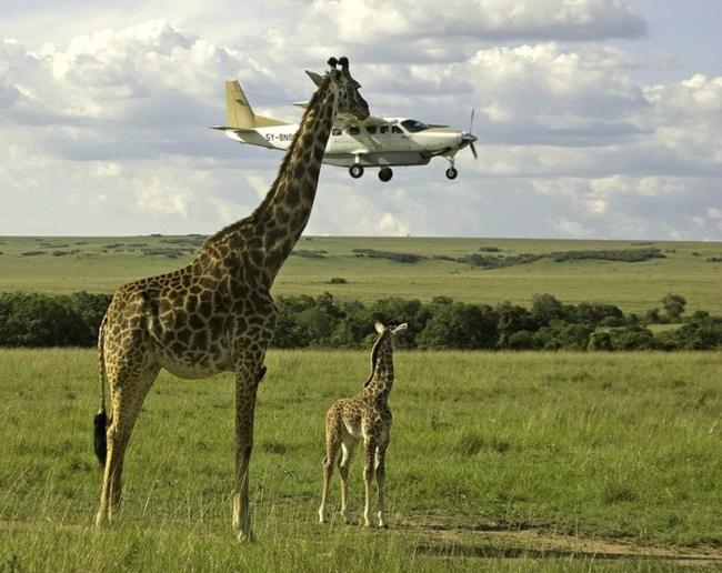 © Graeme Guy  Проверка безопасности полета.