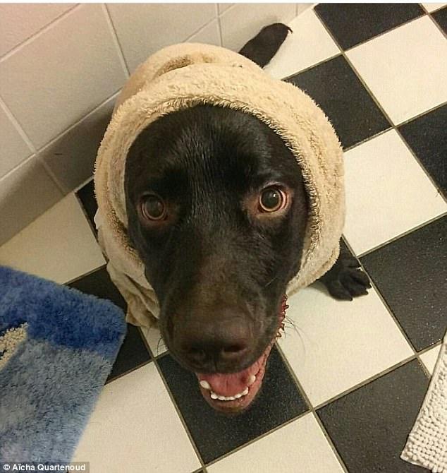 17 фото животных, которые сделают все, чтобы только их не мыли