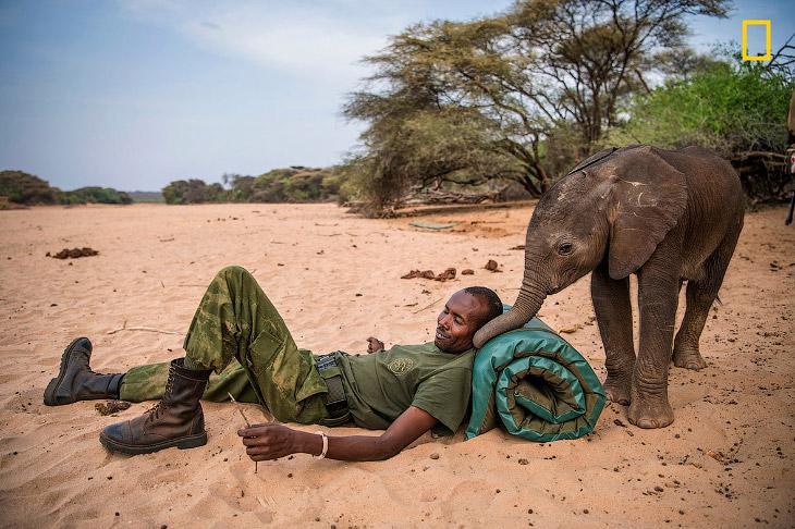 Этот детский слоновий приют Reteti расположился на 975 000 акрах в северной Кении. Маленьких сл