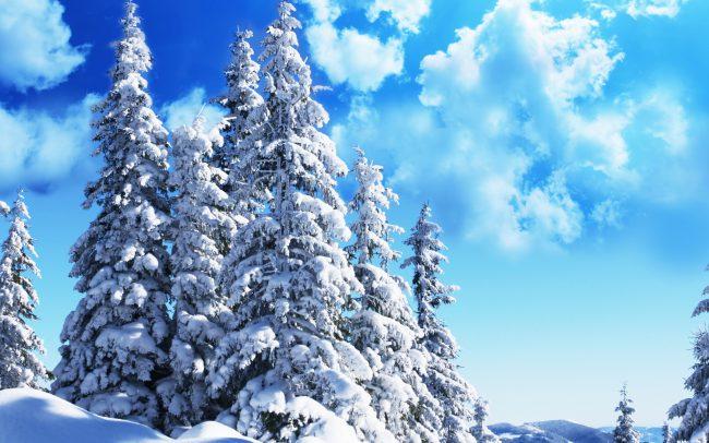 Финские учёные разработали неповторимую систему распознавания деревьев
