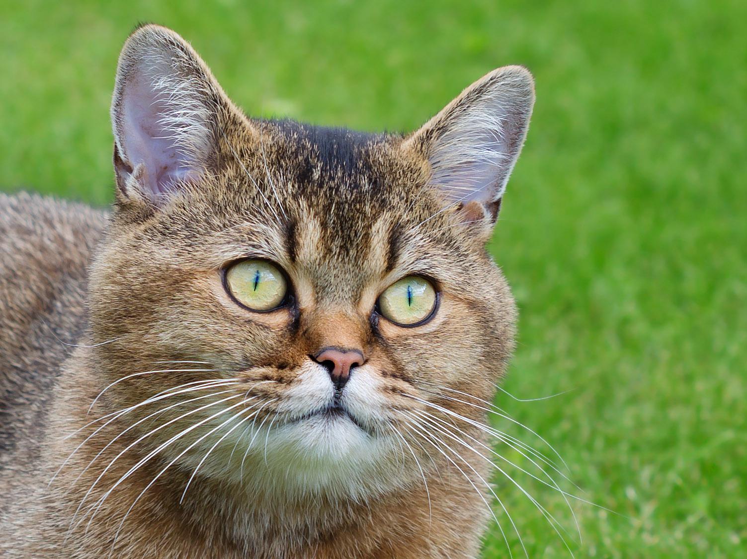 1 марта - День кошек!