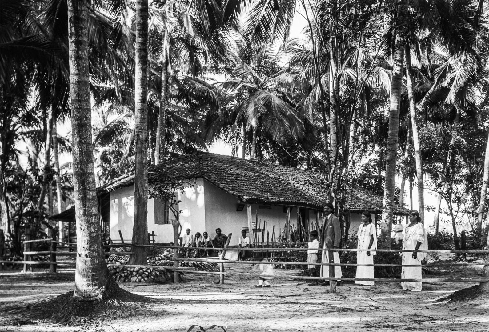 416. Дом в окружении пальм