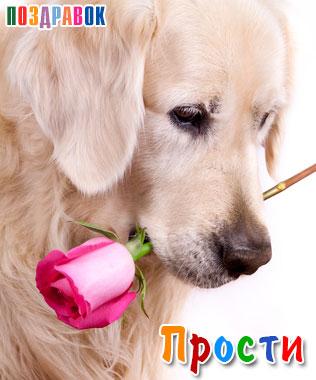 Прости! Песик с розой в зубах