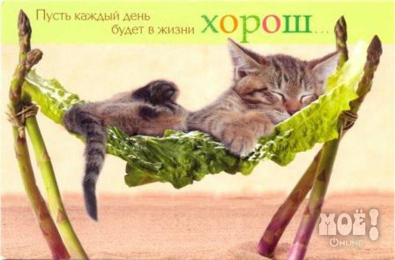 Открытки с котами как выходные