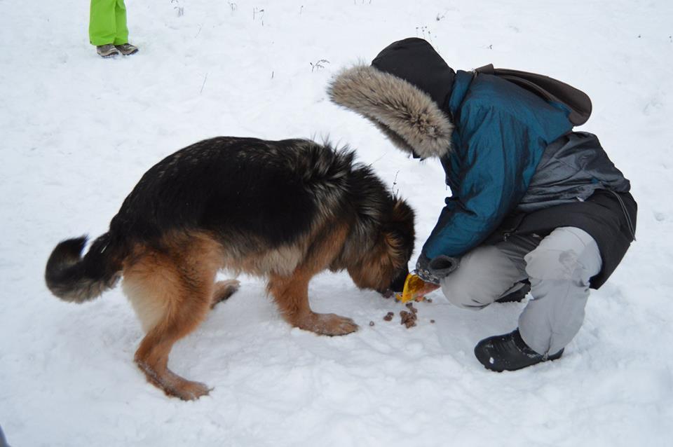 Ирма собака из приюта догпорт