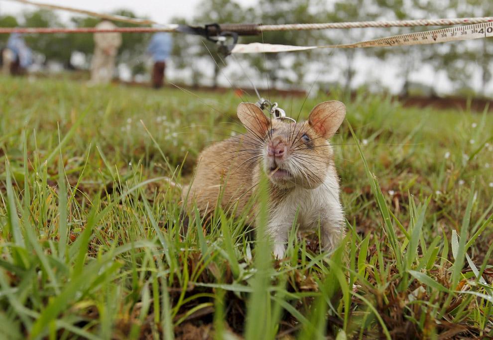 10. Примерно так. (Фото Samrang Pring | Reuters):