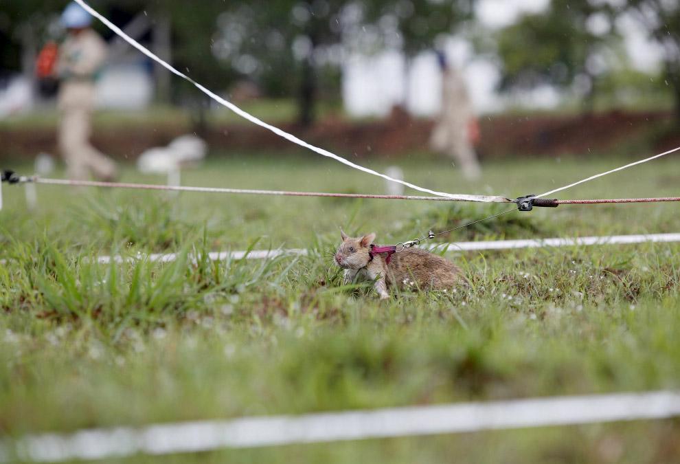 11. (Фото Samrang Pring | Reuters):