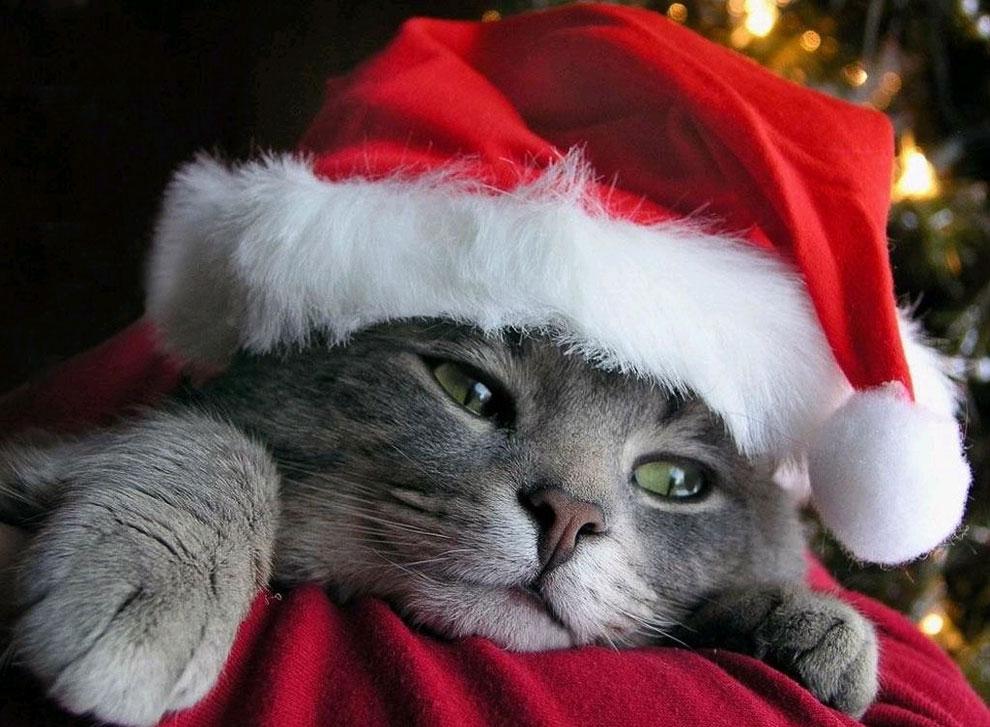 Кошка не против, чтобы вы спали в своей постели. На самом краешке. Дженни де Вриз