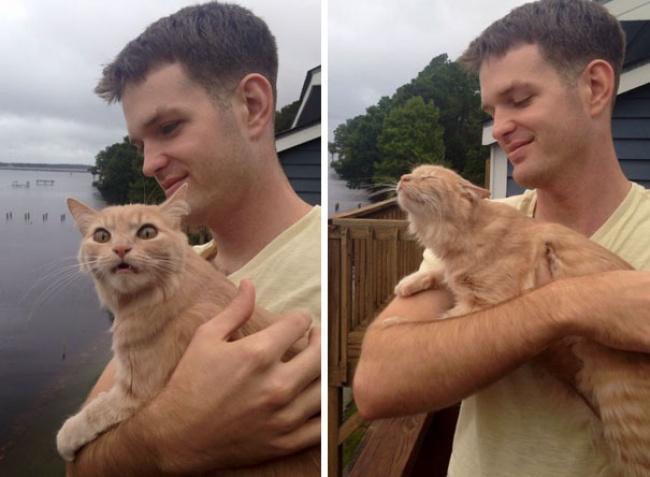 © simpleminded   «Мызабыли сказать коту, что унас родился ребенок»