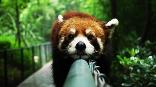 Firefox 52 ускоряет работу сложных приложений, однако вызывает проблемы сGoogle Hangouts