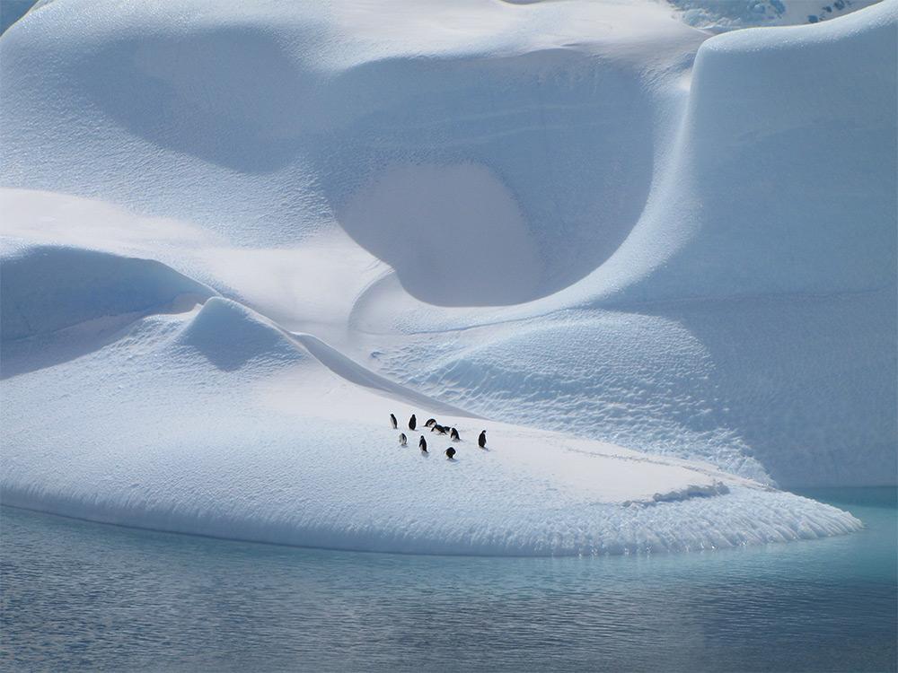 Aspen Wang (Hong Kong, Hong Kong). Finalist: Natural World. Penguins on Ice.