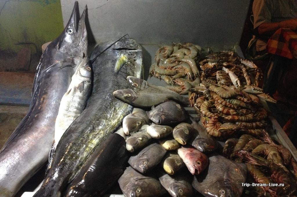 Рыбное изобилие в Коваламе