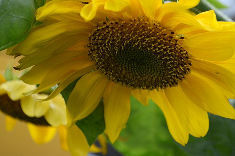 цветы дождь 29.jpg