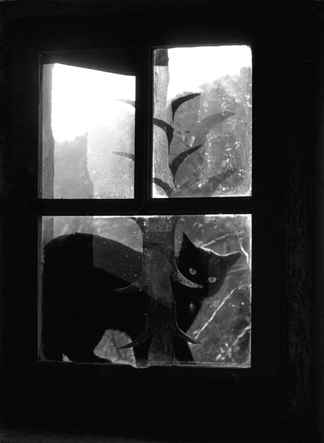 1957. Кошка за стеклом