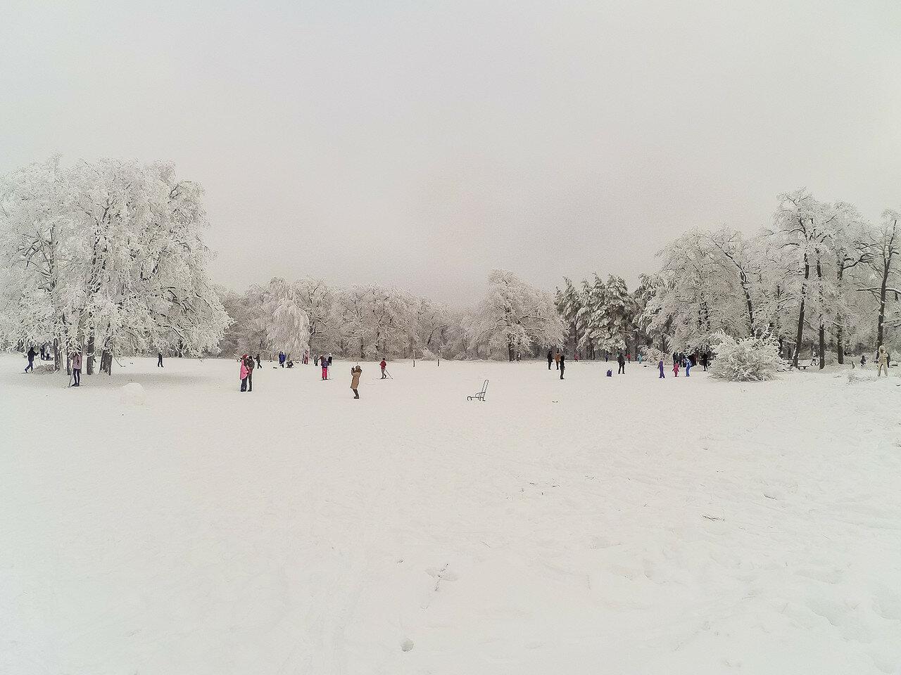 Немного снежного, с лыжных прогулок. фото 3
