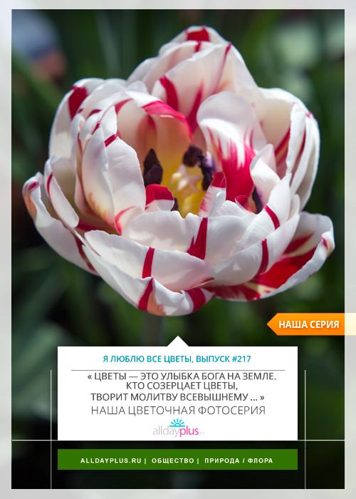 Я люблю все цветы, выпуск 217.