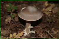 http://img-fotki.yandex.ru/get/105765/15842935.34f/0_e6260_ec22d25b_orig.png