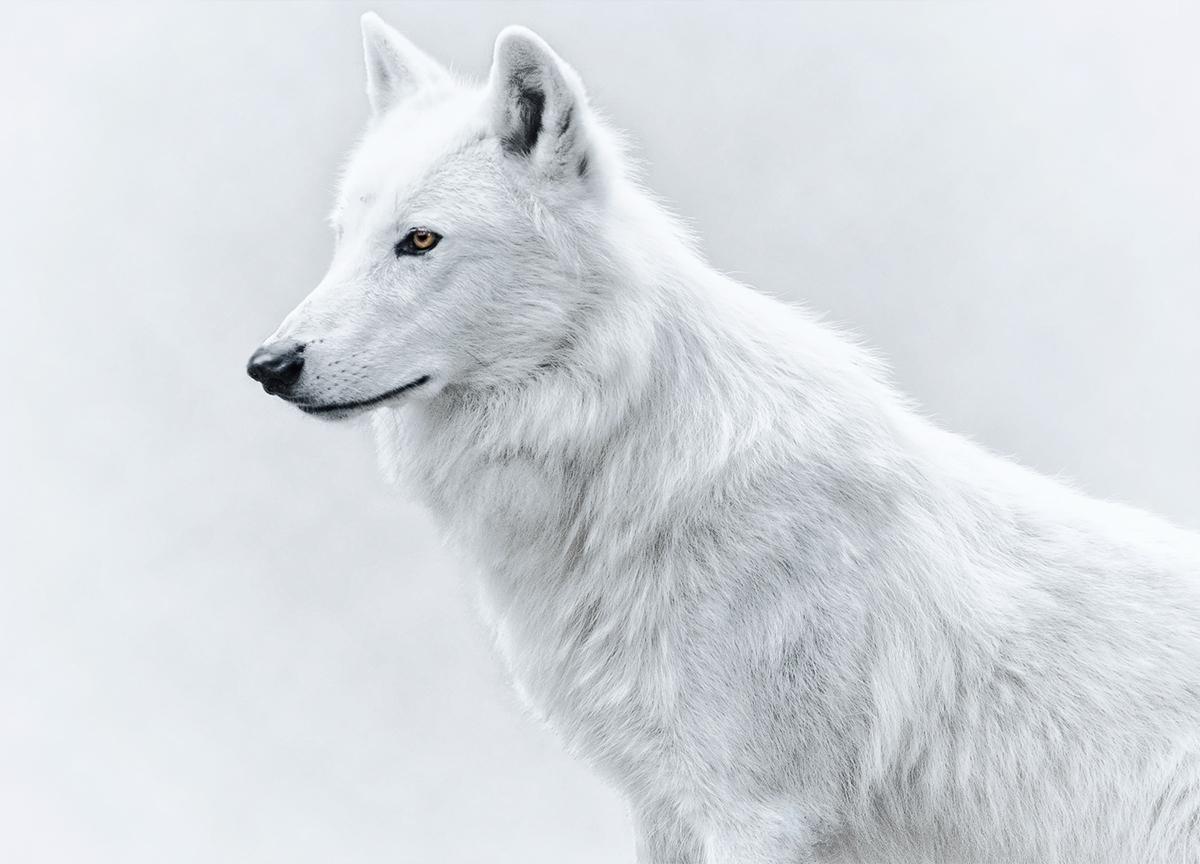 Красивые животные