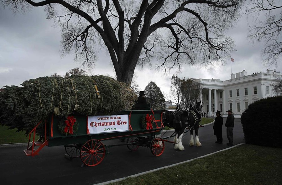 Жена президента встретила елку для Белого дома