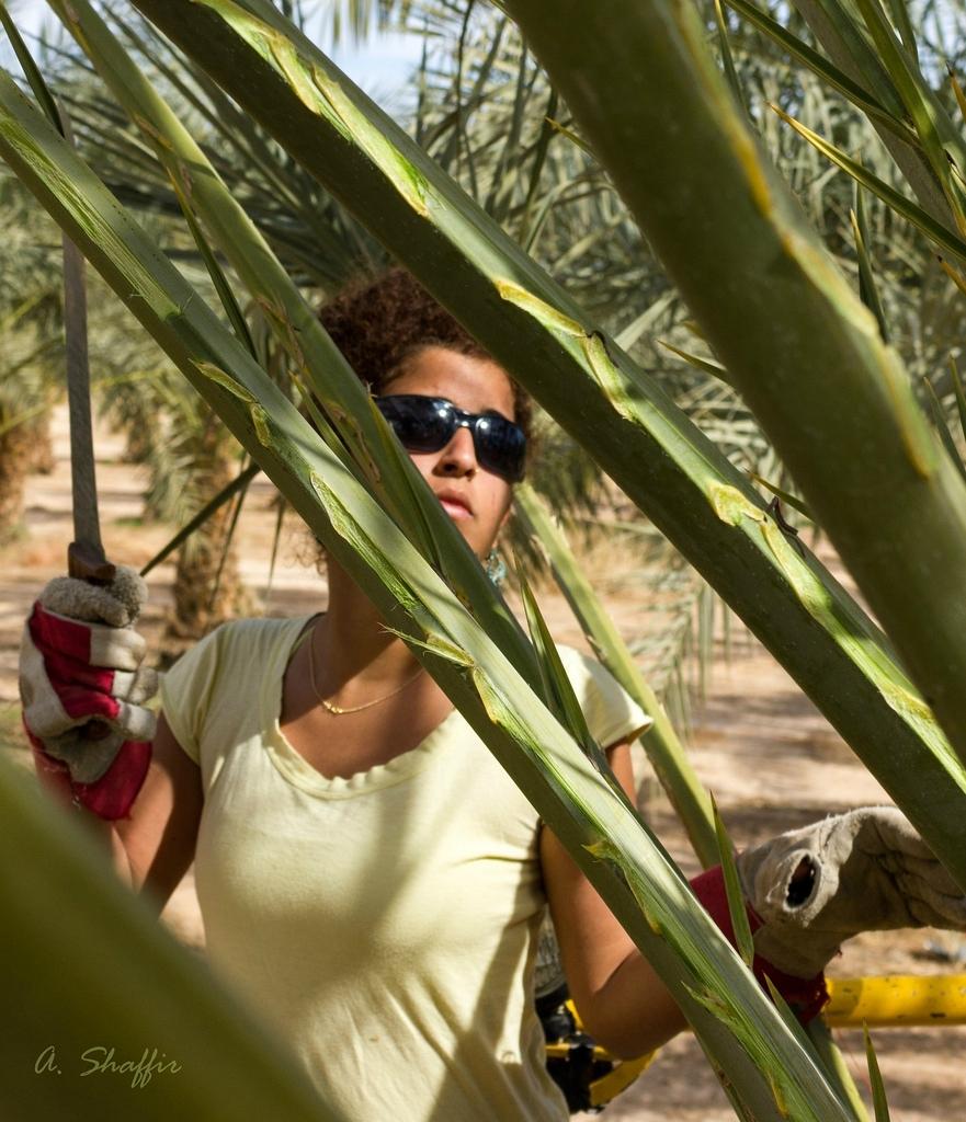 1. Начнем с того, что происходит в эти дни на пальмовой плантации. Все, что здесь будет представлено