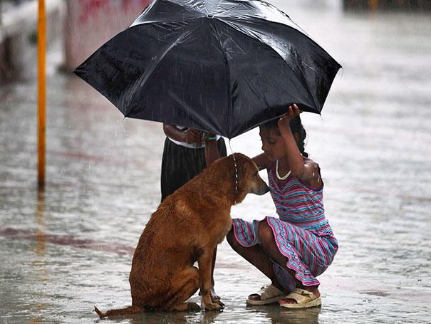 Девочка защищает бродячую собаку от дождя, Индия.