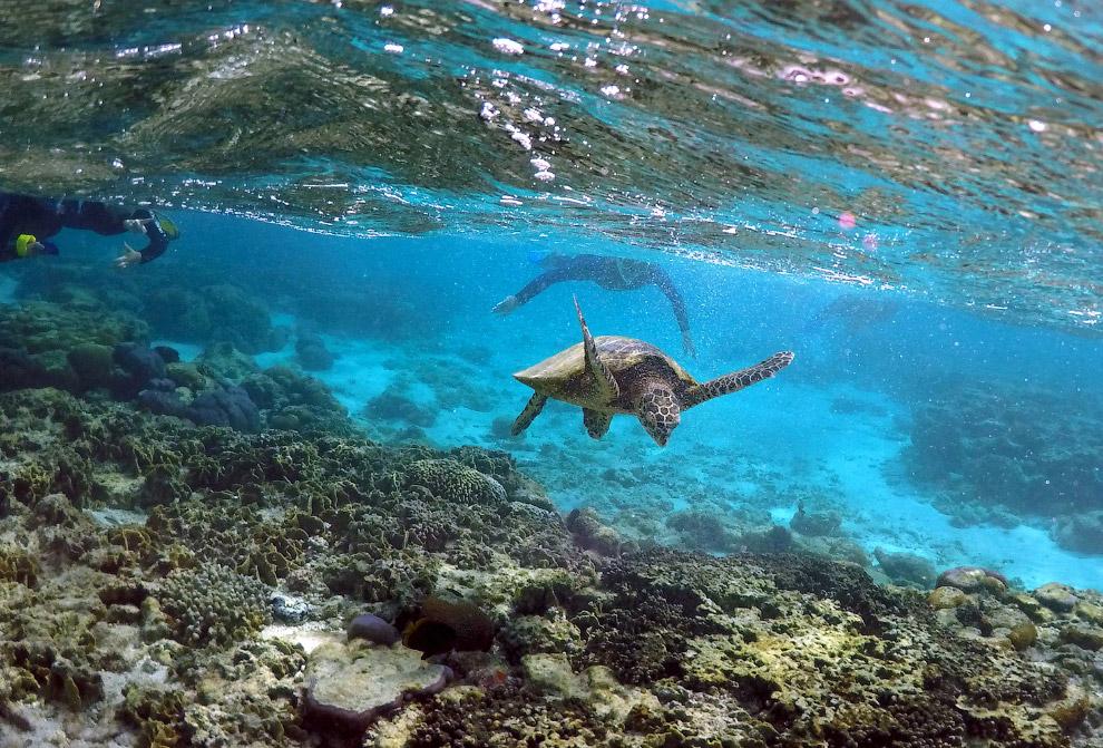 11. Большой Барьерный риф поддерживает жизнь огромного разнообразия живых организмов и благодар