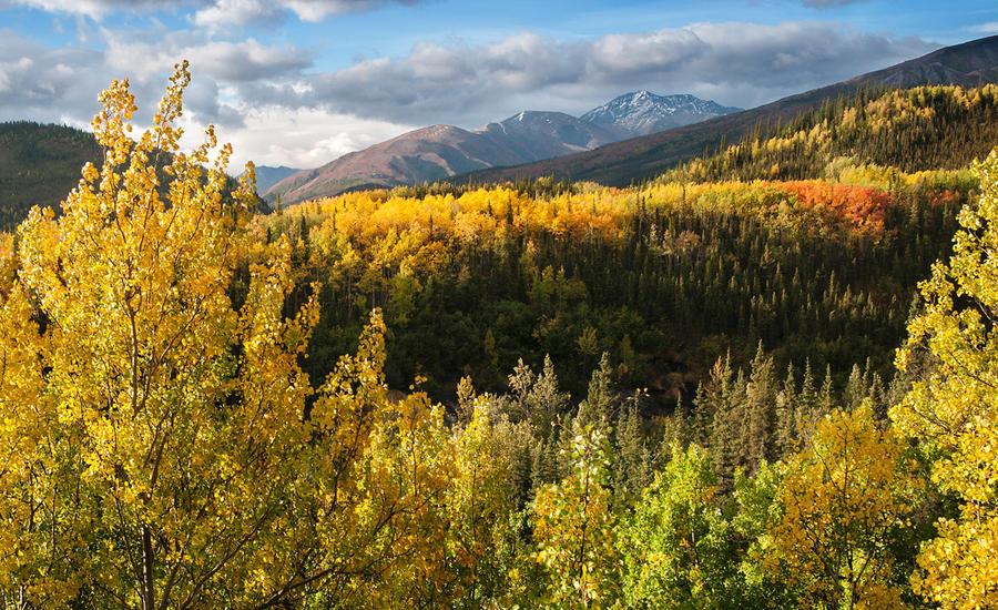 Осенние деньки в Национальном парке Денали