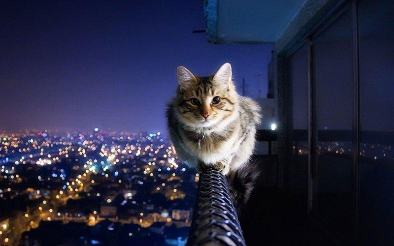 ВЯпонии кошки исобаки живут дальше