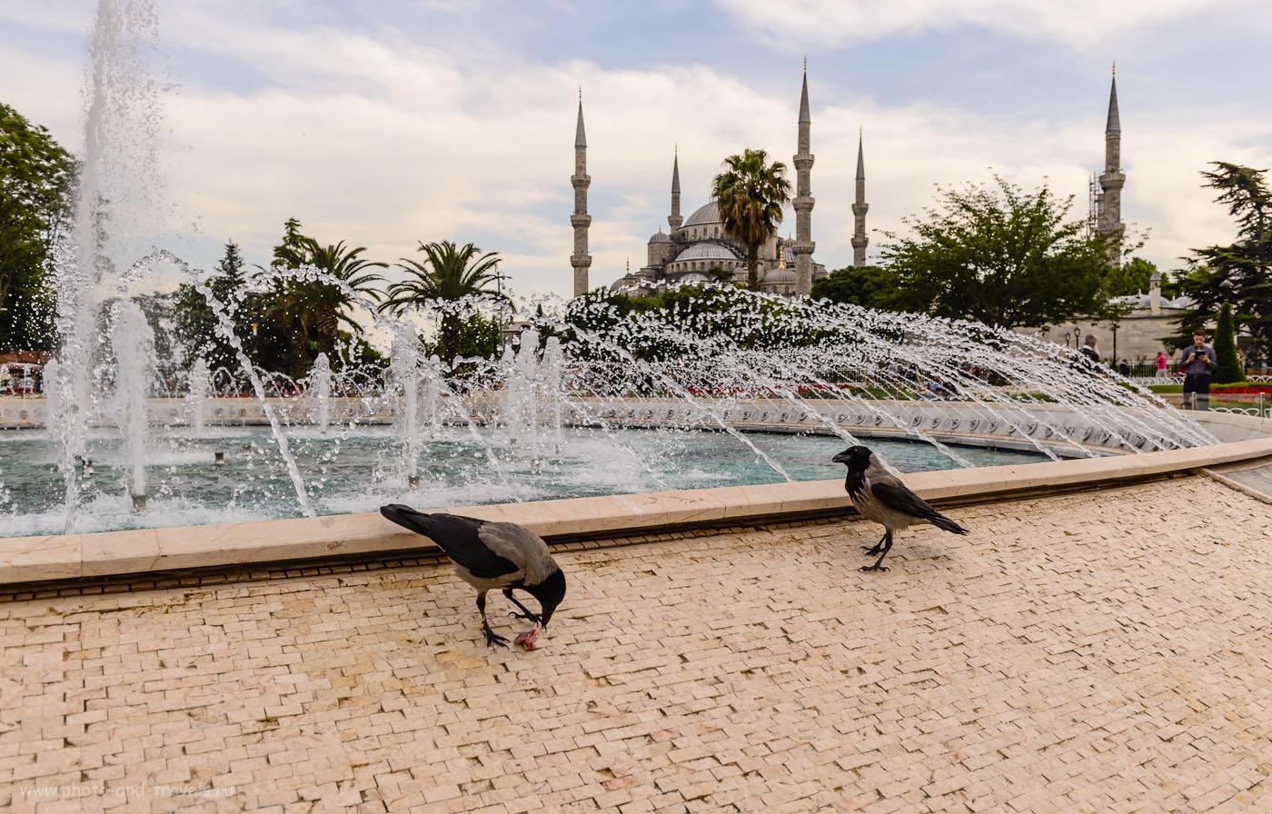 13. Вид на мечеть Султанахмет в Стамбуле. Отчеты туристов об отдыхе в Турции самостоятельно. 1/400, 6.3, 200, 29.