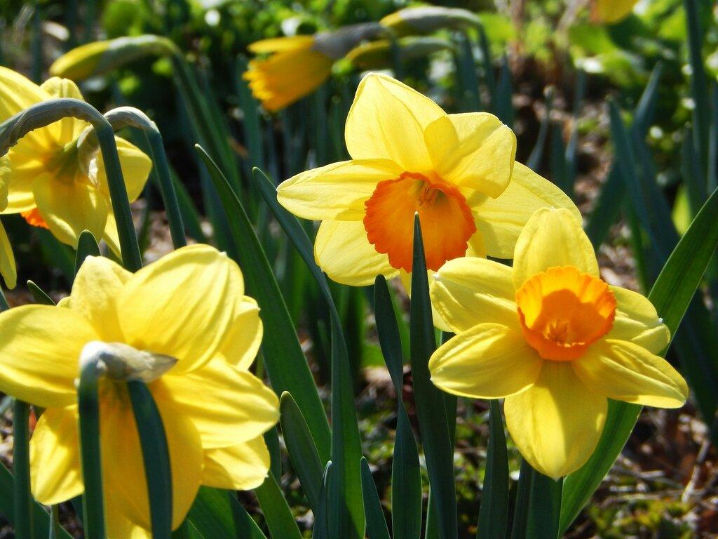 И даже пень в апрельский день...