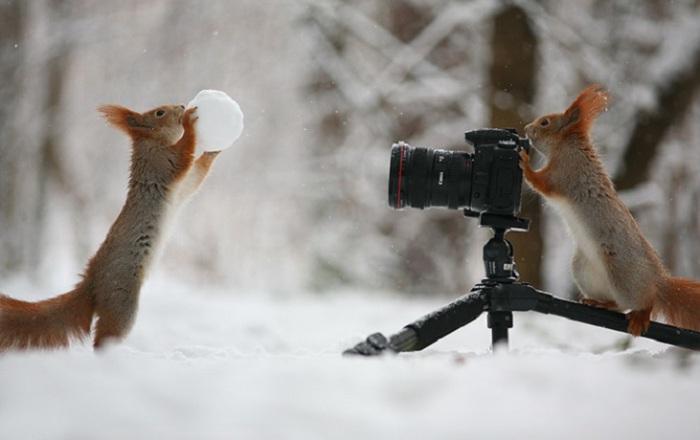 Фотосессия играющихся бельчат. Фотограф Вадим Трунов (Vadim Trunov). Терпение, шишки и орешки п