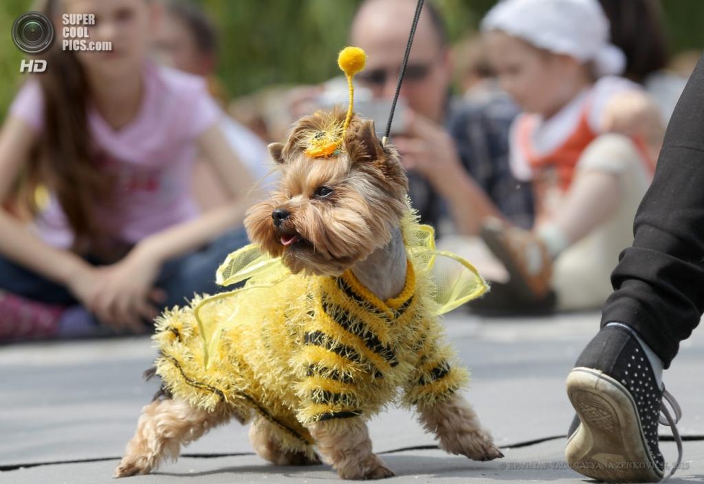 Показ мод собачьих костюмов (7 фото)