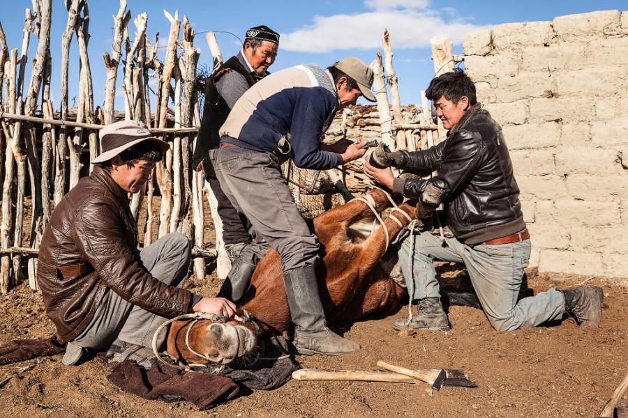 10. Еще одними верными помощниками охотниками являются кони.