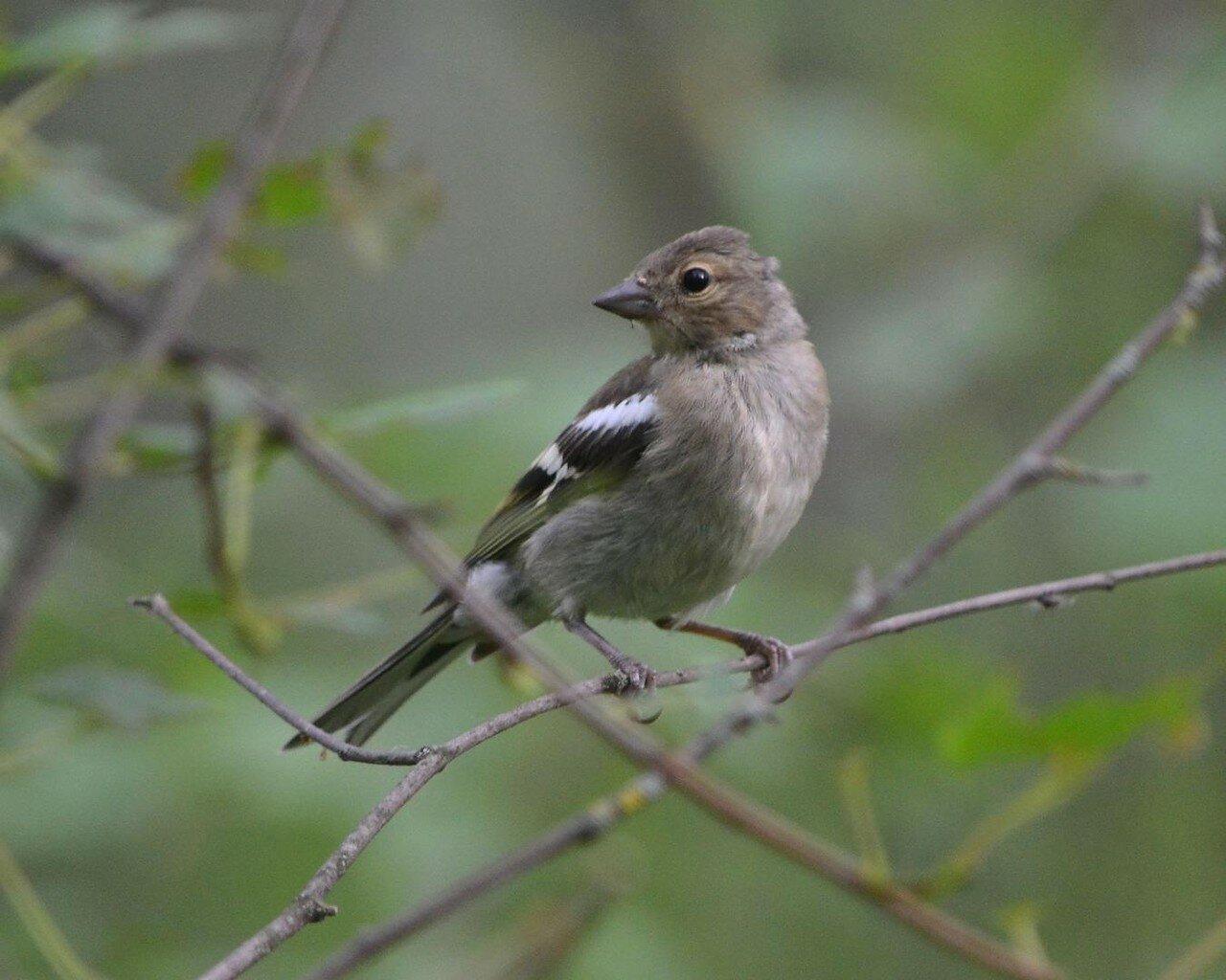 софа это лесные птицы фото с названиями пензы них было