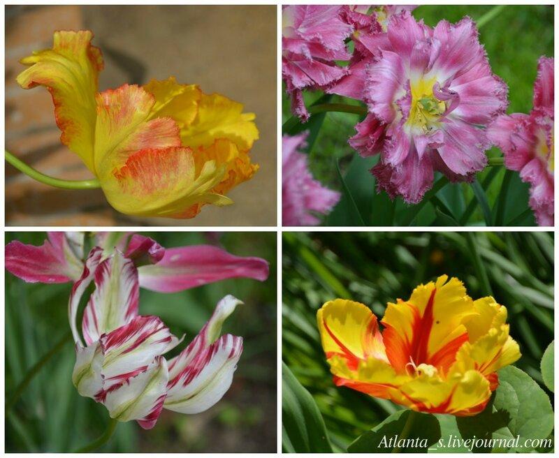 watermarked - тюльпаны1.jpg