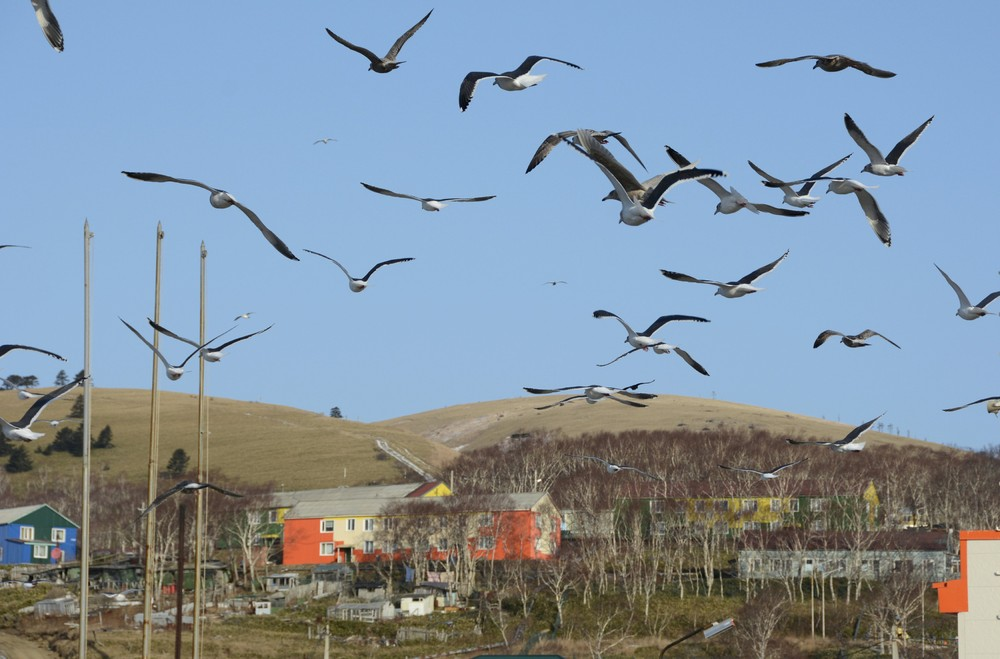 Кадры повседневной жизни на острове Шикотан