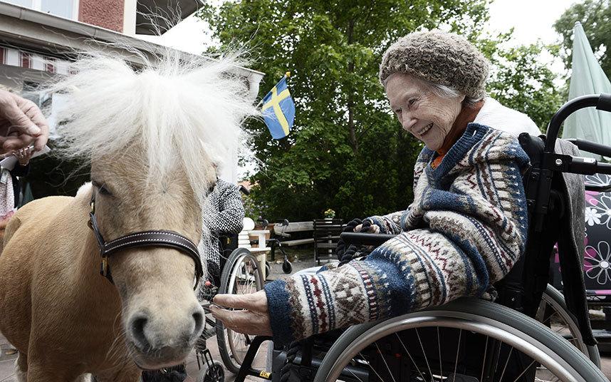 2. Пони являются одной из немногих радостей для 93-летней Хельги, прикованной к инвалидной коляске.