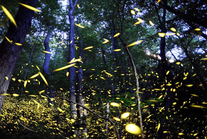 9. Грейт-Смоки-Маунтинс, США Этот национальный парк является естественной средой обитания для 66 вид