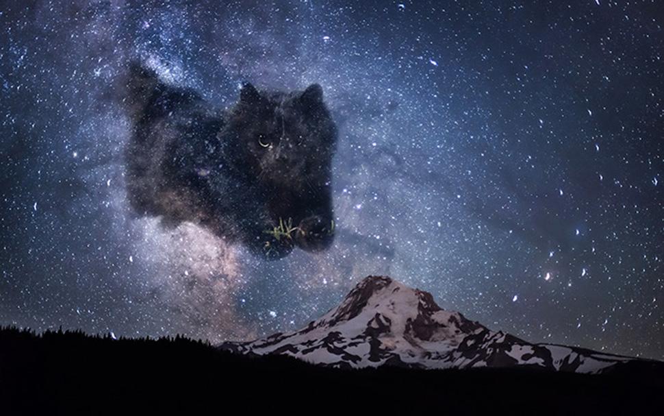 Космический кот.