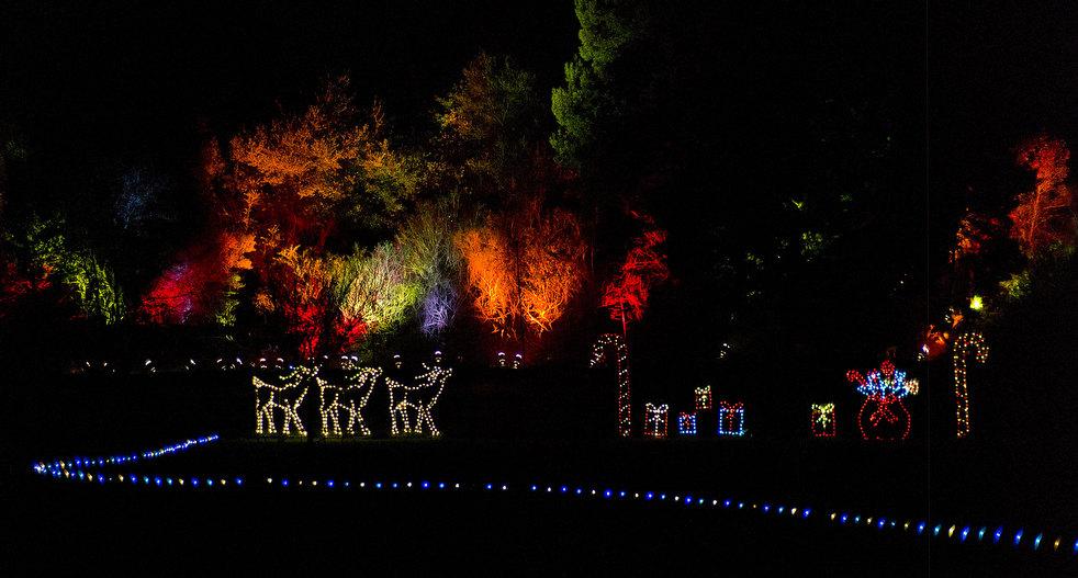 29. Синхронизированное световое шоу под рождественские песни в зоопарке Окленда. (AP / Ben Margot)