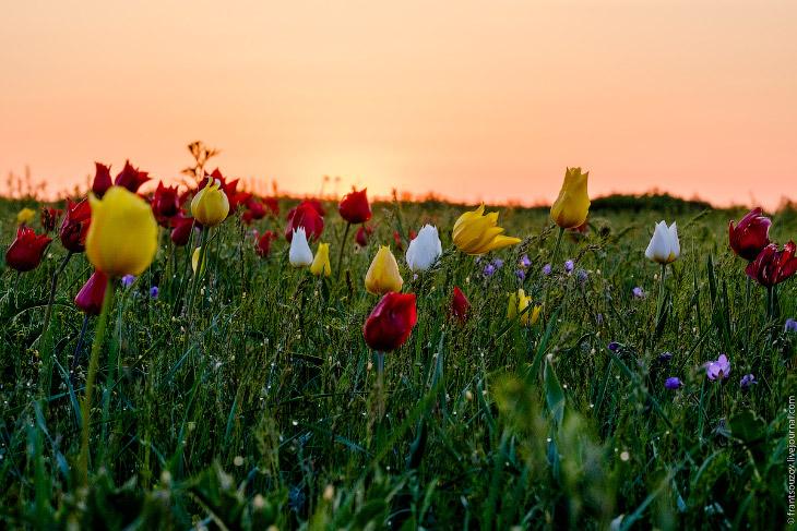 2. Тот красивый момент, когда солнце медленно поднимается над горизонтом.