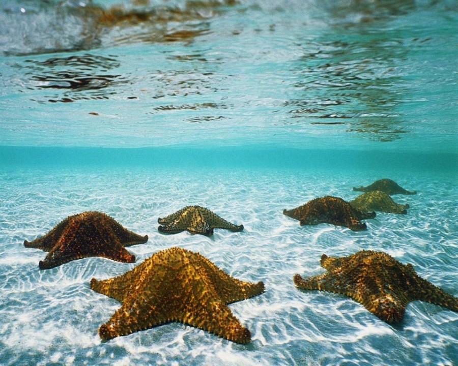 6. Терновый венец Многие из морских звезд очень опасны. К примеру, морская звезда тернового венца, р