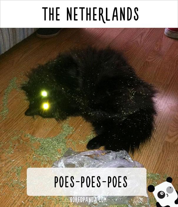 Как в разных странах мира подзывают кошек (23 фото)