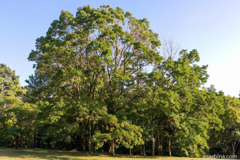 Деревья на поляне